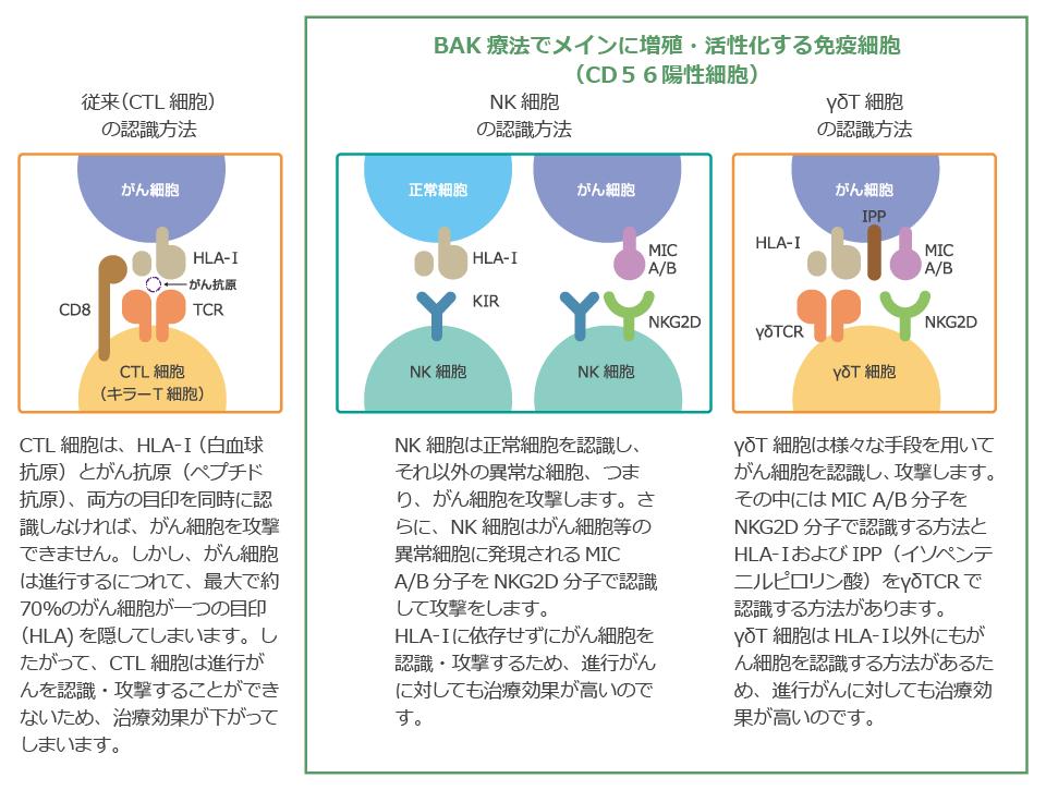 BAK療法でメインに増殖す・活性化する免疫細胞