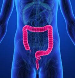 大腸デトックスの重要性