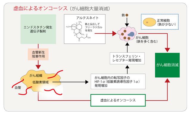 虚血によるオンコーシス(がん細胞大量消滅