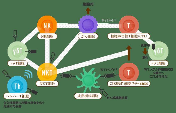 6種複合免疫療法「CSC」 イメージ2